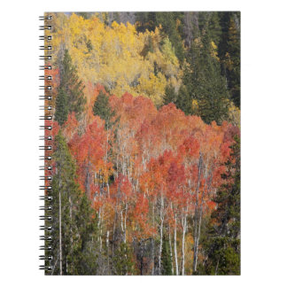 Provo River and aspen trees 6 Notebook