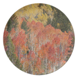 Provo River and aspen trees 6 Plate
