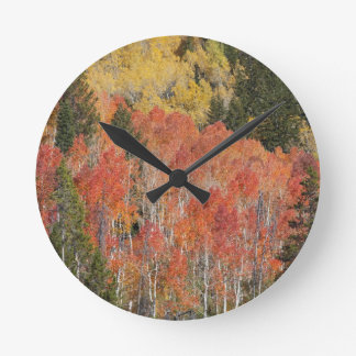 Provo River and aspen trees 6 Round Clock