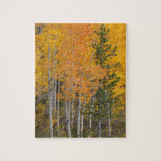 Provo River and aspen trees 7 Jigsaw Puzzle