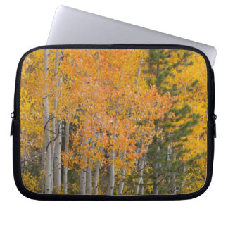 Provo River and aspen trees 7 Laptop Sleeve