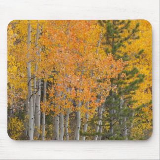 Provo River and aspen trees 7 Mouse Mat