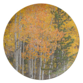 Provo River and aspen trees 7 Plate