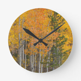 Provo River and aspen trees 7 Round Clock