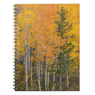Provo River and aspen trees 7 Spiral Notebook