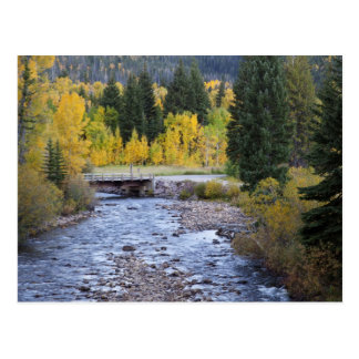 Provo River and aspen trees 8 Postcard