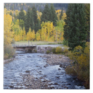 Provo River and aspen trees 8 Tile