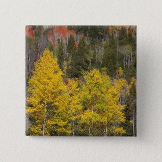 Provo River and aspen trees 9 15 Cm Square Badge