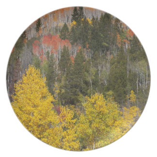 Provo River and aspen trees 9 Dinner Plates