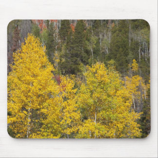 Provo River and aspen trees 9 Mouse Mat