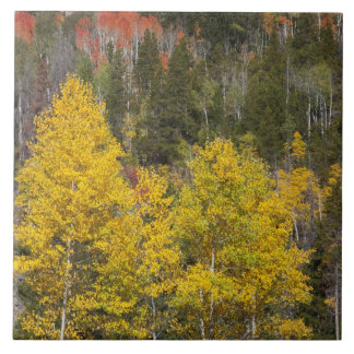 Provo River and aspen trees 9 Tile
