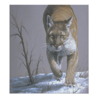 Prowling Cougar Art Poster Photo Print