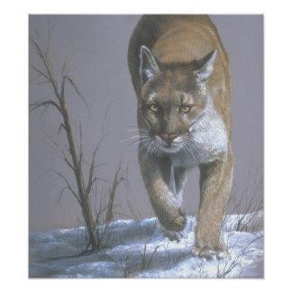 Prowling Cougar Art Poster Photo Print