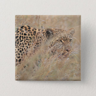Prowling Leopard Hiding in Grassland 15 Cm Square Badge