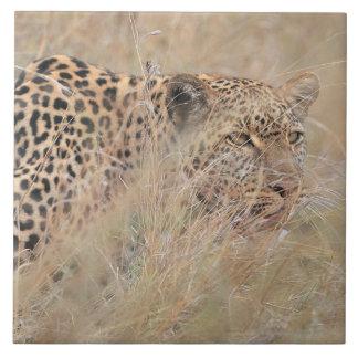 Prowling Leopard Hiding in Grassland Tile