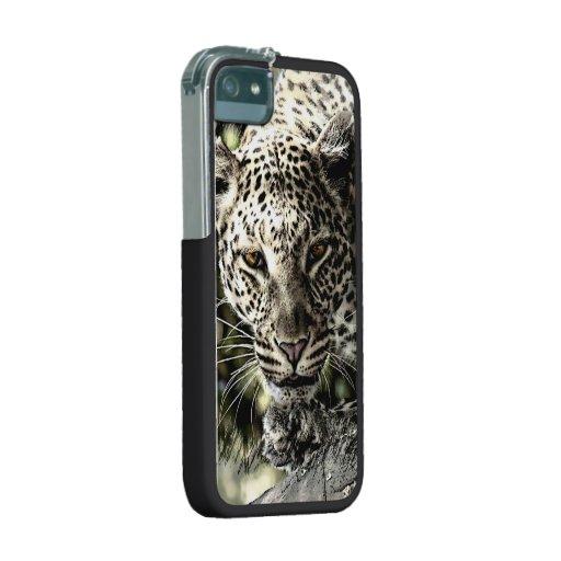 Prowling Leopard Stalking iPhone 5/5s Case