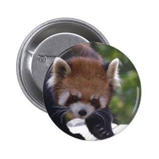 Prowling Red Panda 6 Cm Round Badge