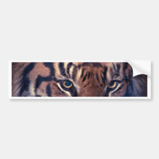 Prowling Tiger Bumper Sticker
