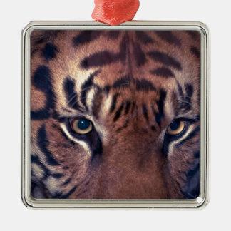 Prowling Tiger Silver-Colored Square Decoration