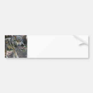 Prowling Wolf Bumper Stickers