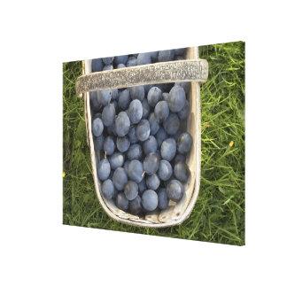 Prunus domestica, Damsons Canvas Print