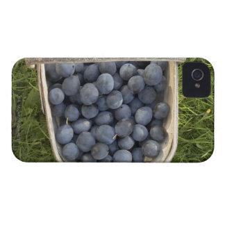 Prunus domestica, Damsons iPhone 4 Covers