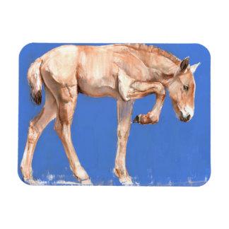 Przewalski Foal 2012 Rectangular Photo Magnet