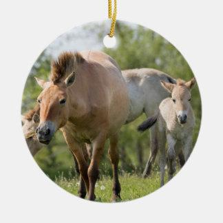 Przewalski's Horse and foal walking Round Ceramic Decoration