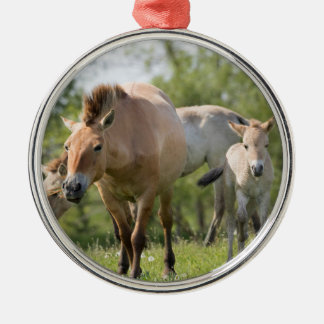 Przewalski's Horse and foal walking Silver-Colored Round Decoration