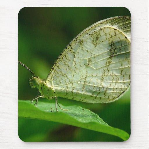 Psyche Leptosia Nina Butterfly Mouse Pad Zazzle