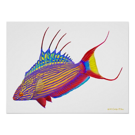 Psychedelic Bell's Flasher Wrasse Fish Poster