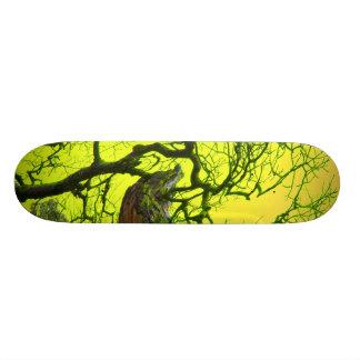 psychedelic board skate board decks