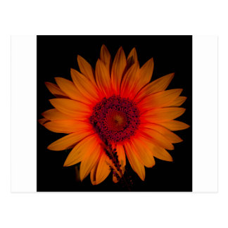 Psychedelic Sunflower Postcard