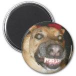Psycho Dog Round Magnet