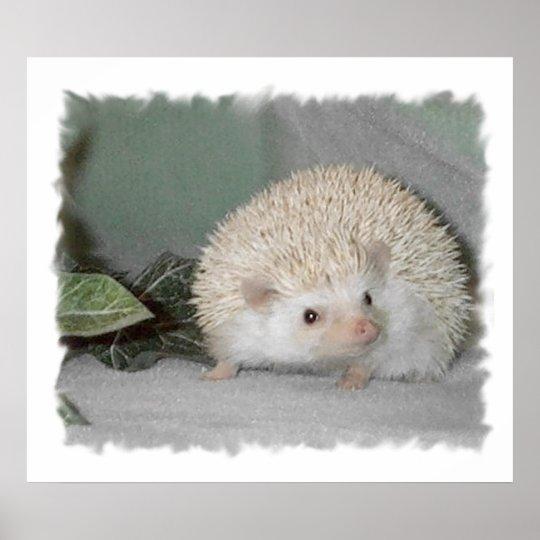 Ptarmigan the Hedgehog Poster