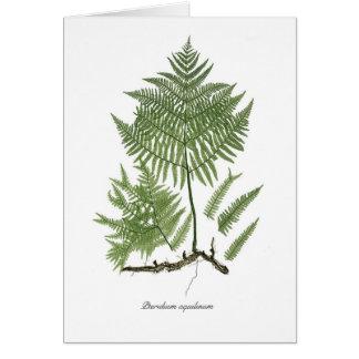 Pteridium aquilinum greeting card