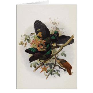 Ptiloris victoriae - Queen Victoria's Rifle-bird Greeting Card