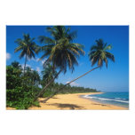 Puerto Rico, Isla Verde, palm trees. Photo