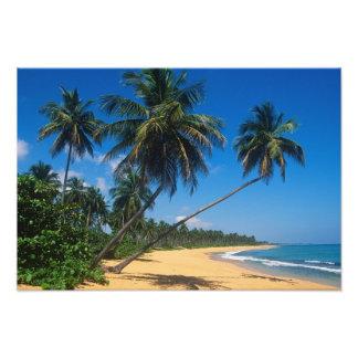 Puerto Rico, Isla Verde, palm trees. Photographic Print
