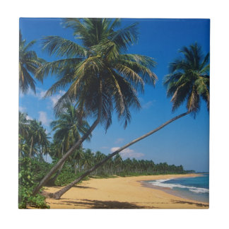 Puerto Rico, Isla Verde, palm trees Small Square Tile