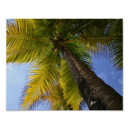 Puerto Rico Palm by RZB Poster