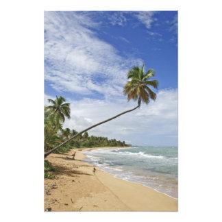 Puerto Rico. Tres Palmitas Beach Puerto Rico Photograph
