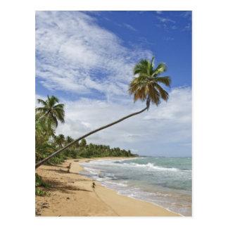 Puerto Rico. Tres Palmitas Beach Puerto Rico Postcard