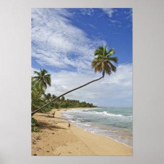 Puerto Rico. Tres Palmitas Beach Puerto Rico Poster
