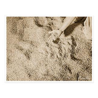 Puerto Rico Vintage: Rice Crop Postcard