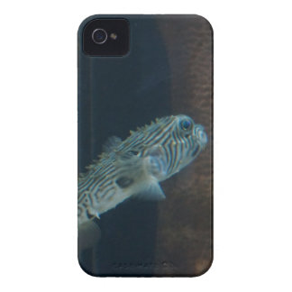 Puffer Fish Mirage iPhone 4 Covers