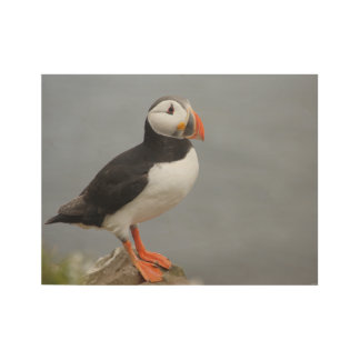 Puffin Bird Antarctic Nature Wood Poster