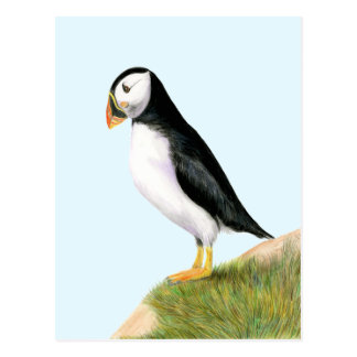 Puffin Bird Watercolour Painting Print fratercula Postcard