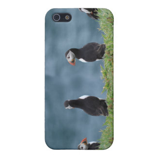 Puffin  case for the iPhone 5