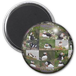 Puffin Collage 6 Cm Round Magnet